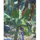 « Young woman under banana trees »